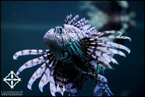The Lion of Fish by the-seawolf