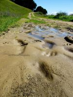 mud prints by BPinzonPhotography