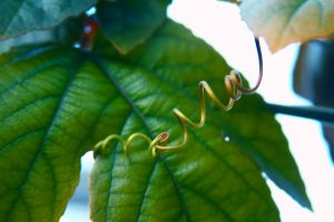 tendril 2 by stockofshutterbugmom