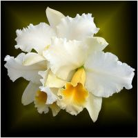 ORCHIDS 5 by THOM-B-FOTO