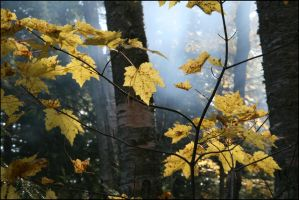 Leaves and smoke - Oct 2008 by pearwood