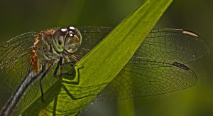 dragonfly 2693 by craigp-photography