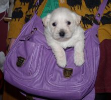 Puppy in a Bag by Charlimon
