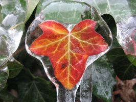 glassed leaf by Symphonicon