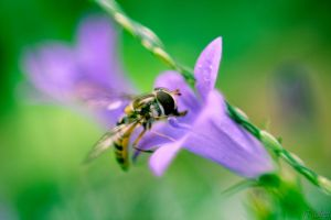 BEe by houssam6464