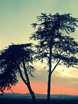 Two Trees. by Givemore
