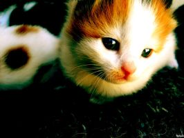 kitten. by psychopathic-jad