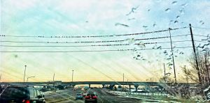 Birds on a Wire - 121 by mudyfrog