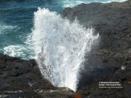 Little Blowhole, BIG IMPACT by BrendanR85