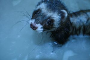Bath time for the Dook-dook by Avelith