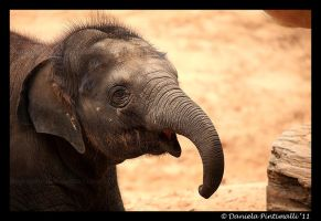 Baby Elephant Smile by TVD-Photography
