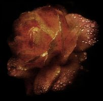 Just A Rose by buntscheck