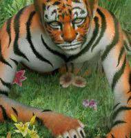 Tiger In The Jungle Close Up by yoklmn