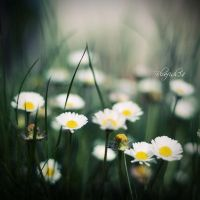 little flowers of happiness by BlueFish24