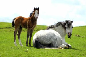 mare and foal by imtl