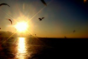 the sun with sea gulls by LaRieNeLaNeSSe