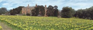 FILOLI'S FIELD OF DAFFODILS by swtiine