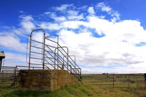Cattle Trade by SiqueBrand