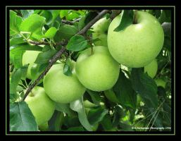 Apple Row by picworth1000wrds
