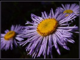 dewdrops in the morning by ariseandrejoice