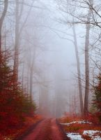 Bloodred Forest XI by Aenea-Jones