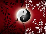 Yin - Yang by Life-For-Sale