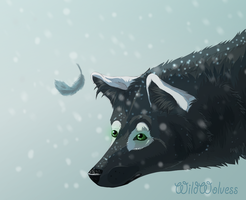 Snowy Feather Commission by WildWolvess
