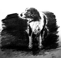 A Dog by cougermiau
