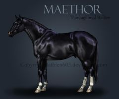 Maethor Reference by Hathien603