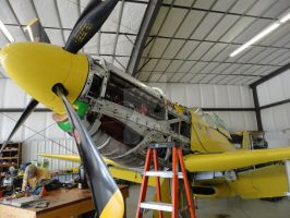 Old Yeller 6 by Pwesty