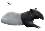 Cut-out stock PNG 115 - malayan tapir by Momotte2stocks