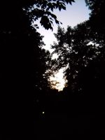 Behind the trees by Epiphone14