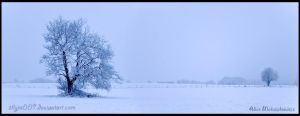 White Panorama by allym007