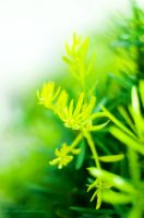 greenery by holamiamor