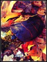 Turtle in the Fall by Kimmyo801
