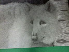 Grey Wolf by CryWolf96