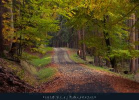 Grimm's Forest in October 10 by kuschelirmel-stock