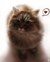 Rindo - Portrait of a cat by FixelCat