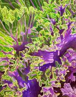 Ornamental Kale by joeyartist