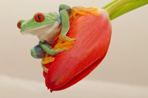 Little green frog by mansaards