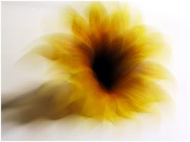 Sunflower Explosion by enaz-blue