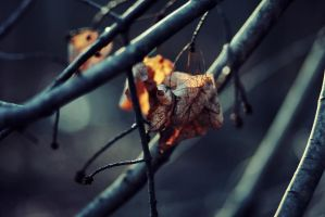 remnants of autumn by bailey--elizabeth