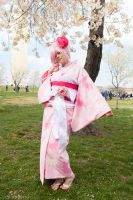 Cherry Blossoms by dust-bunny