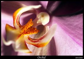Orchid by Bandit83