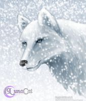 White Wolf by FlyingPony