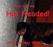 Hot Headed Cat by UncleGargy