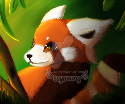 - Red Panda Painting - by soyawing