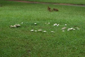 Fairy Ring by SalsolaStock
