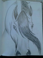 Nosey ..... Horse by devilzfemale666