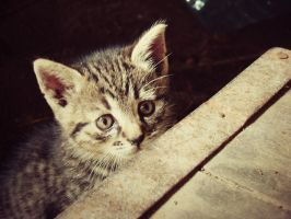 kittykat by na-tala
